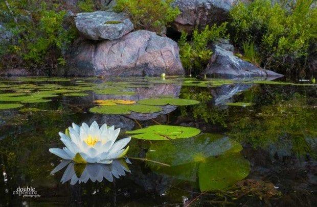 Paddling among the beauty of a summer morning on Stony Lake, Ontario.