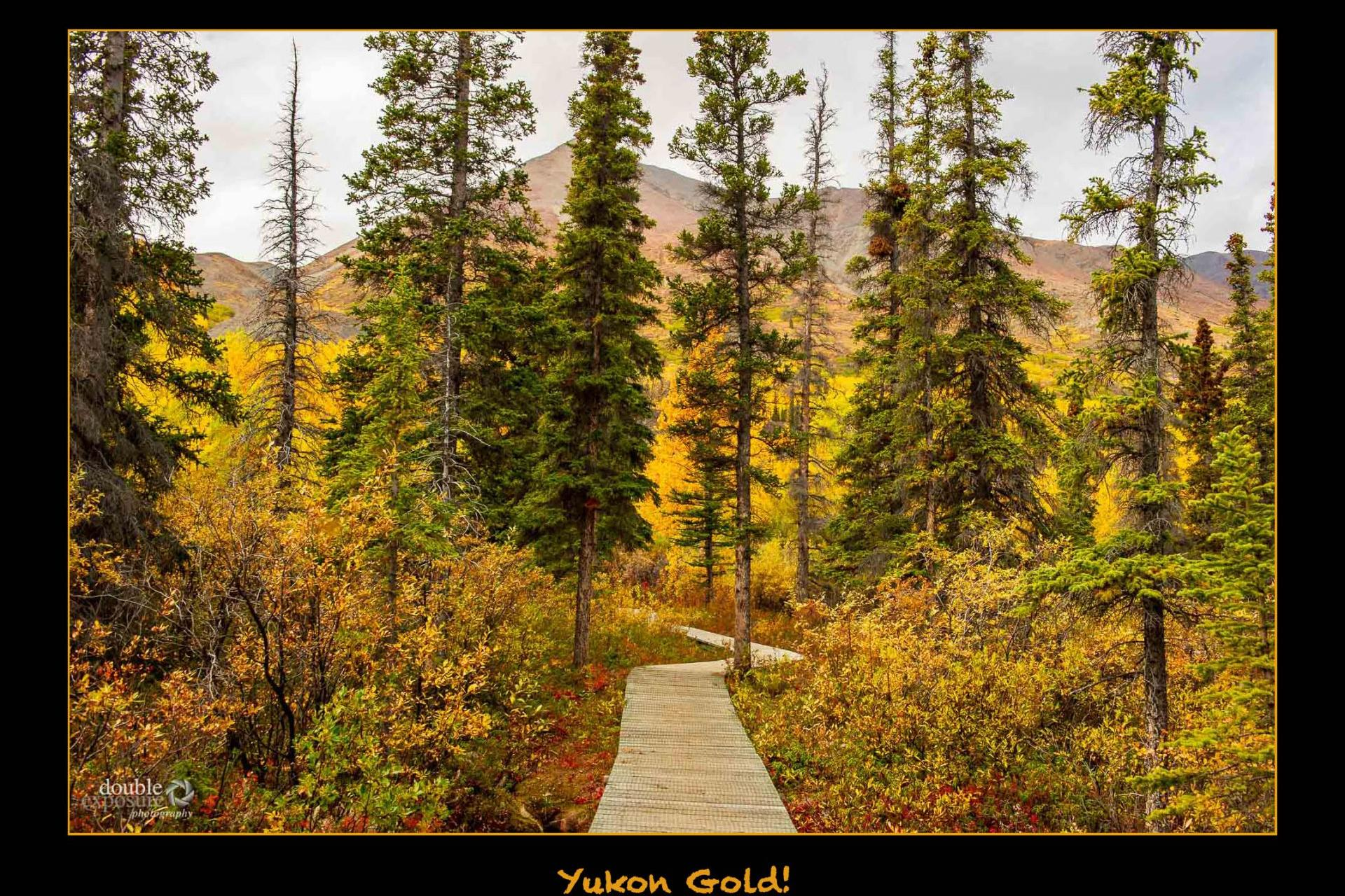 Yukon Gold!