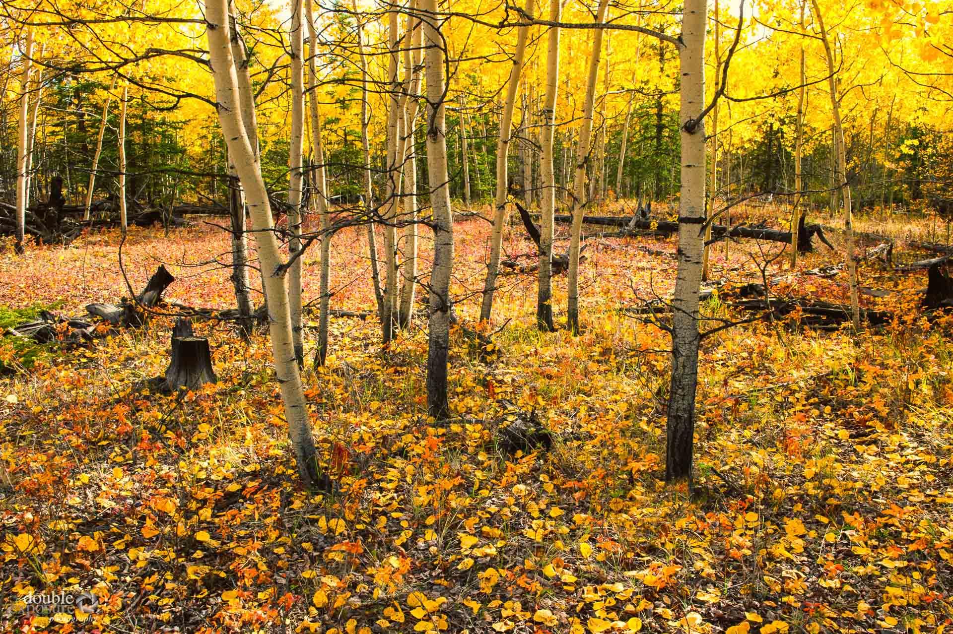 Colours of Yukon