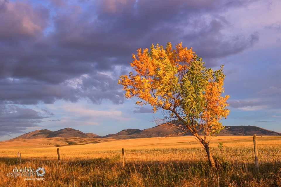 As the storm cleared, the colours on the prairie were irresistible