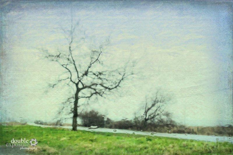 bare tree in rain