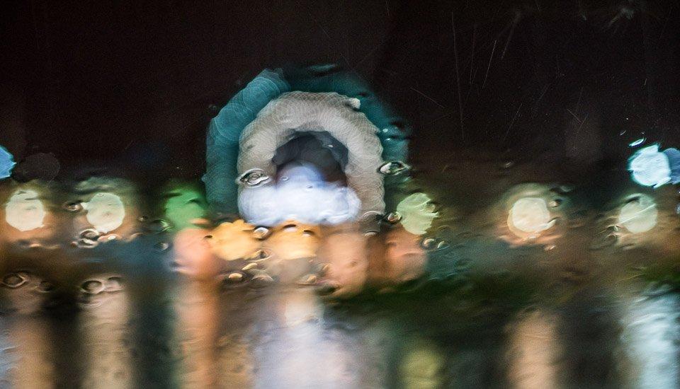 rain creatures at night