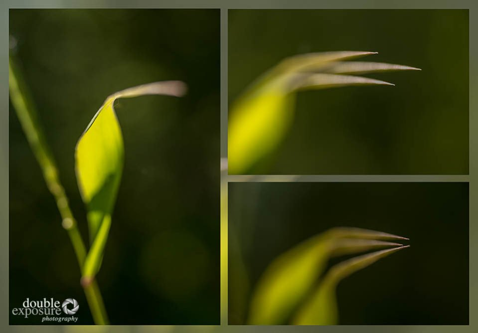 abstract of grass