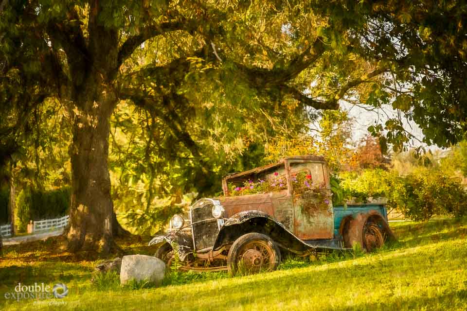 An old Model T Ford lies in a garden, rusting.