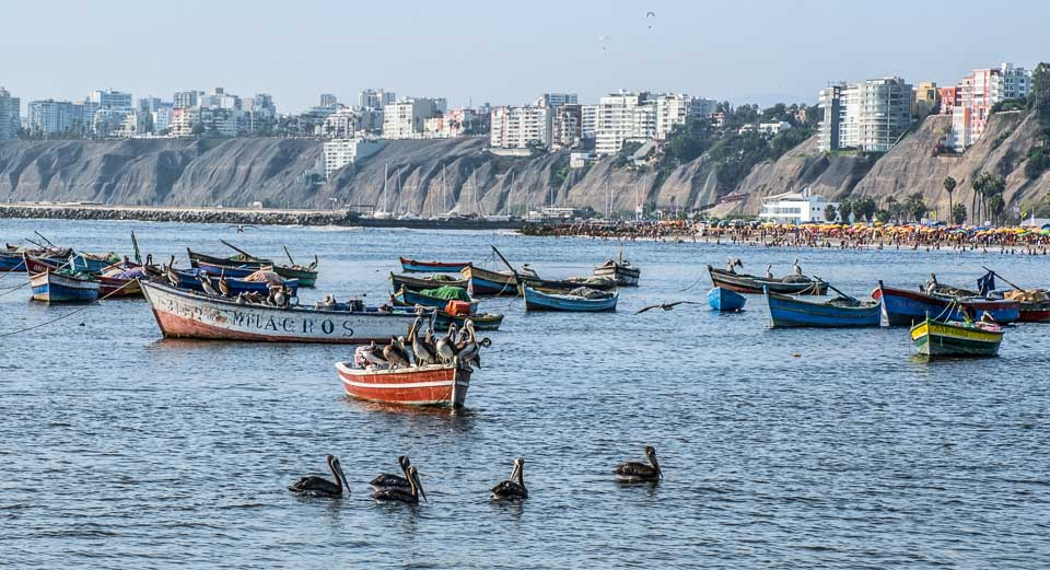 pelicans and people flock to the beaches of Lima