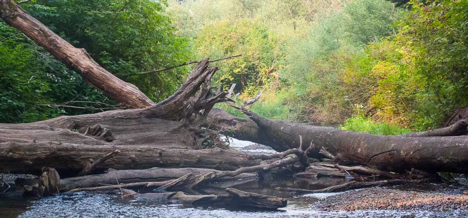 River with fallen trees.