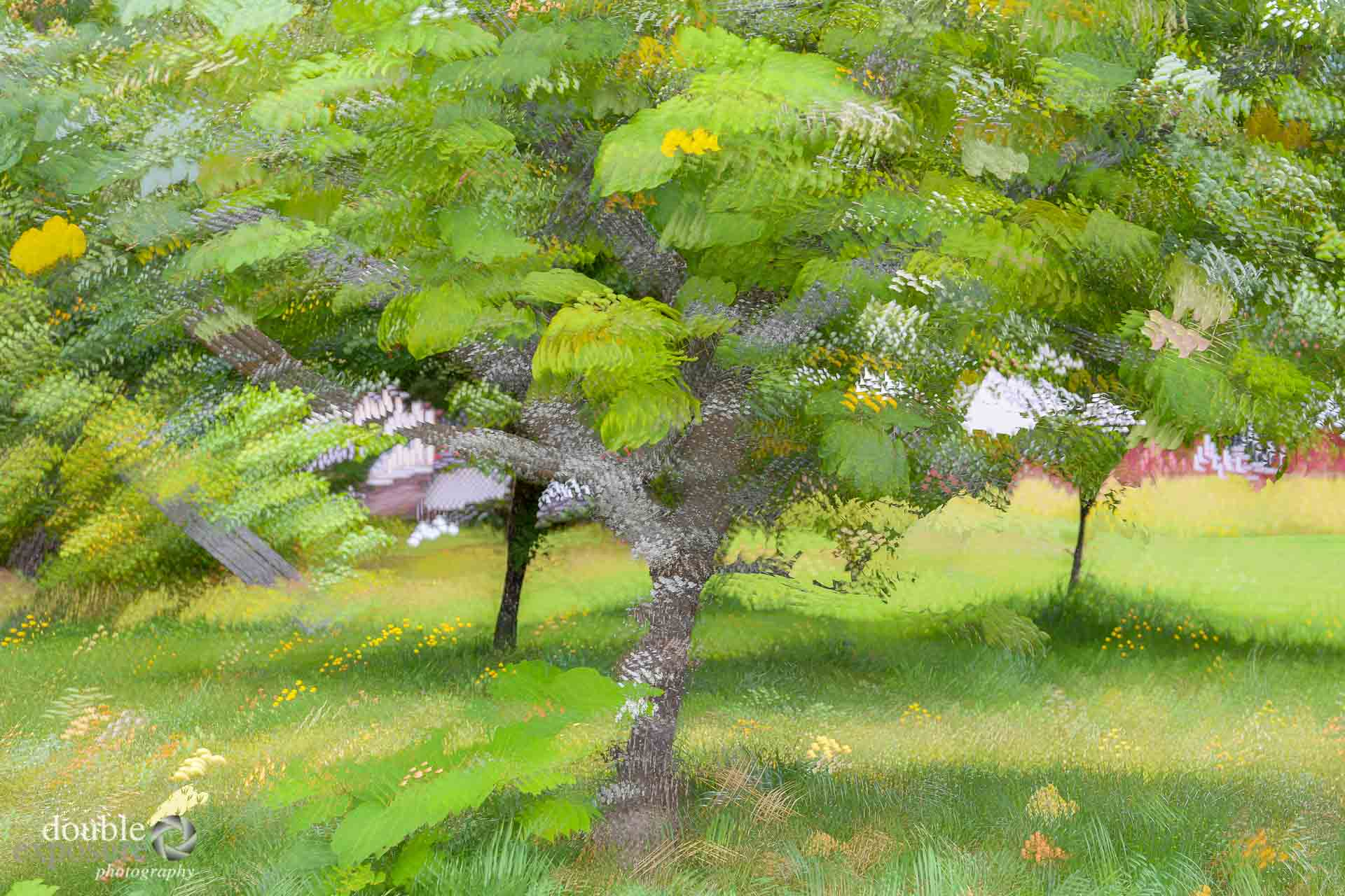 impressionistic view of apple orchard.