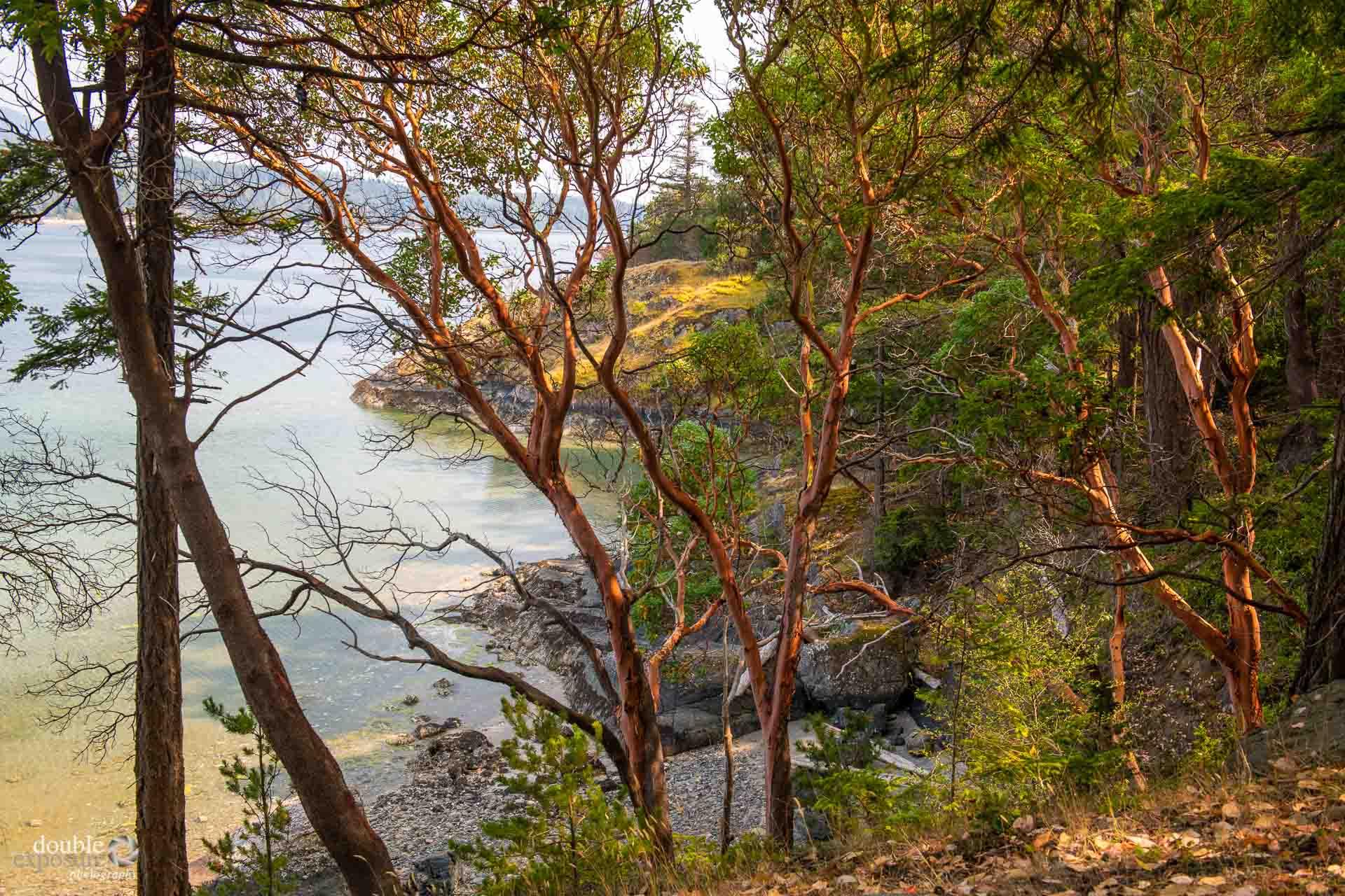 Arbutus trees are plentiful on Texada Island