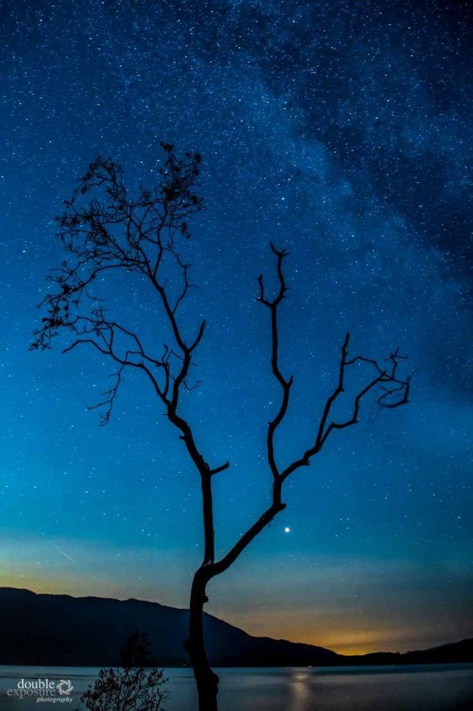 Arbutus tree at night with stars.