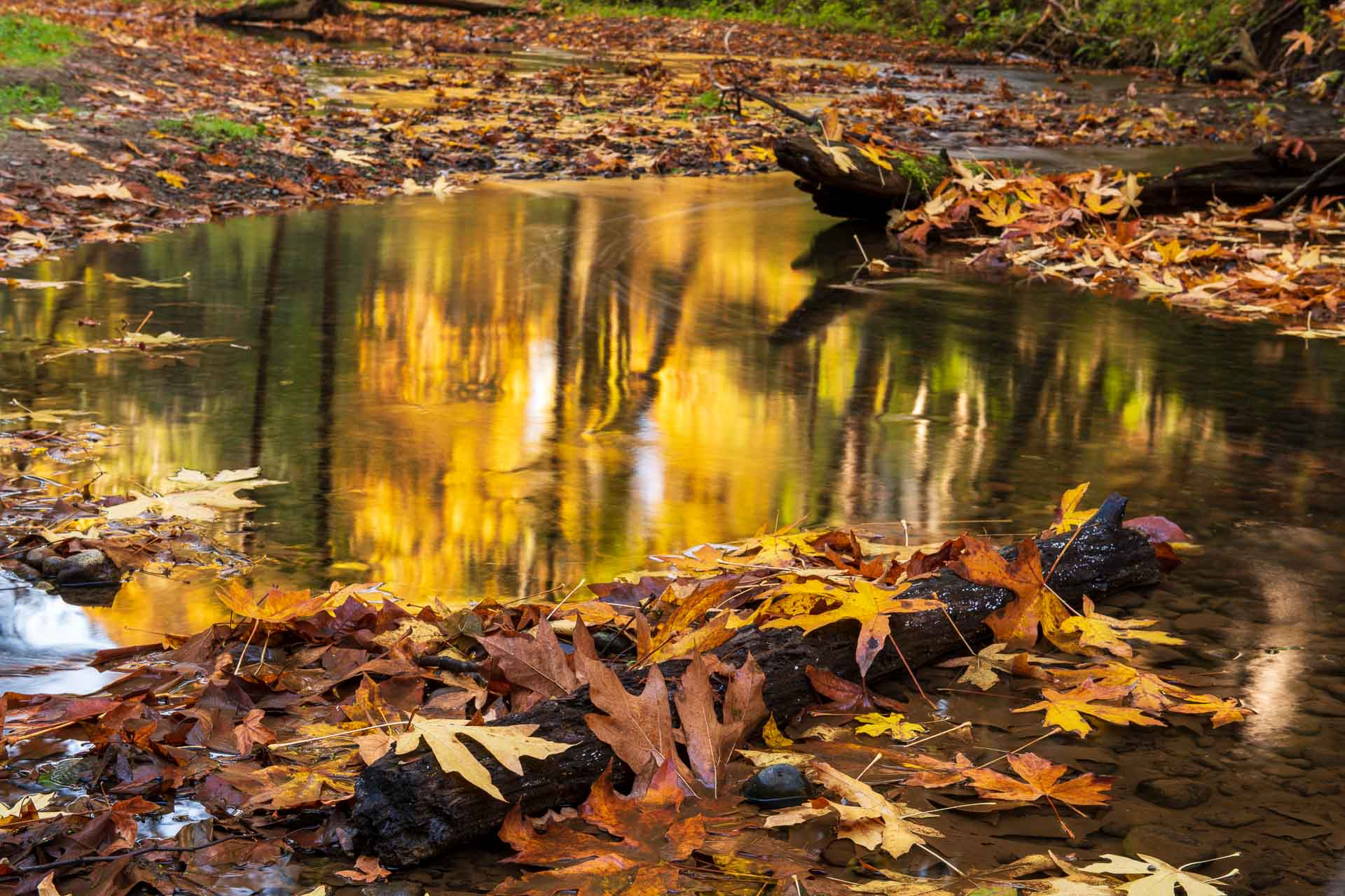 Reflections of autumn, creative photography by Dennis Ducklow