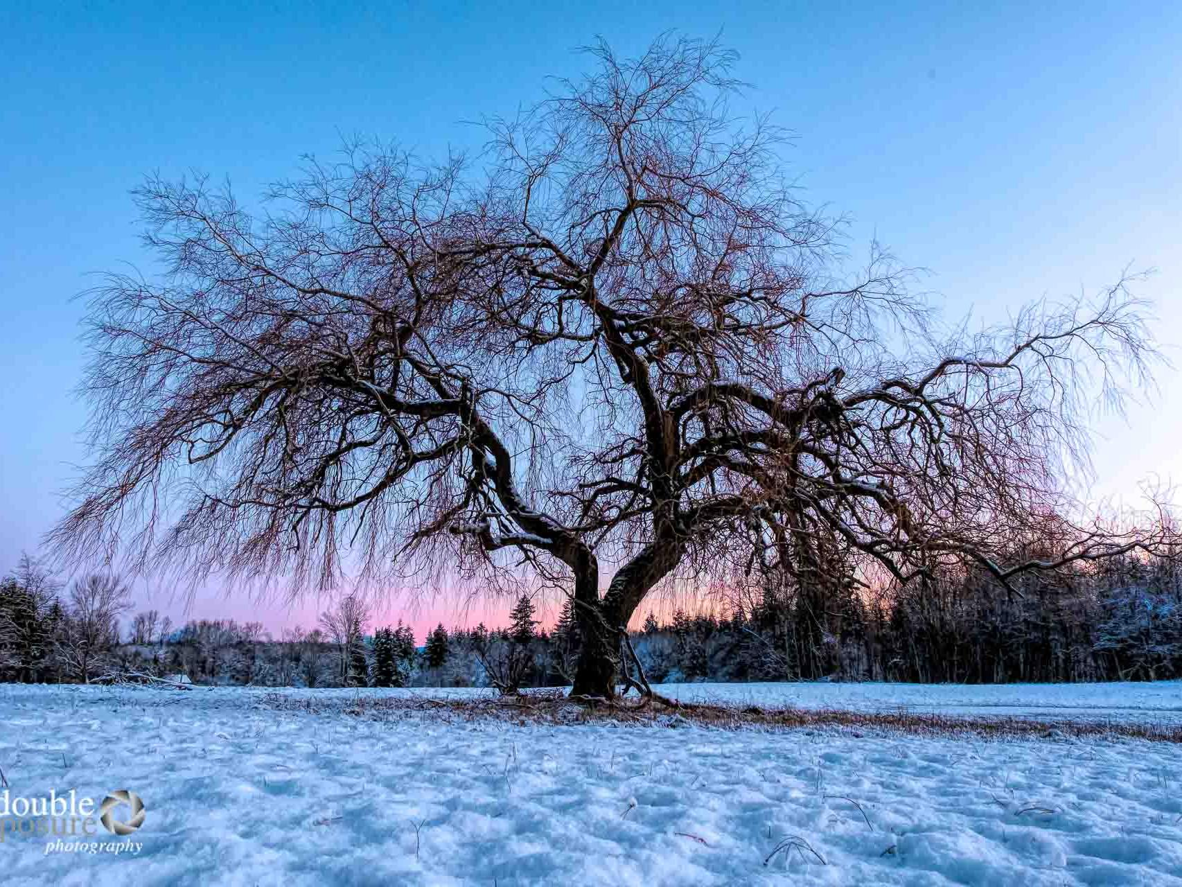 Winter in Campbell Valley Park, Langley BC