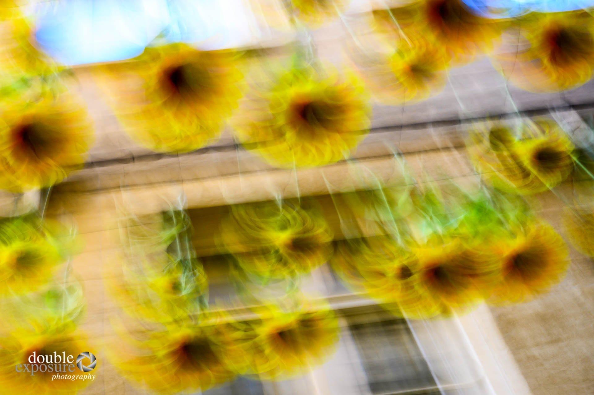 sunflowers on a city street