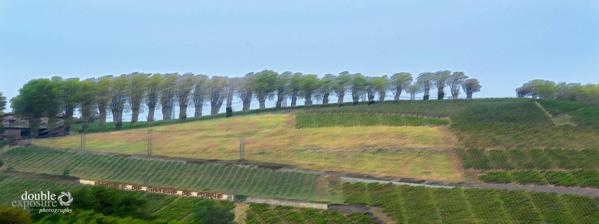 vinyards in Beaujolais