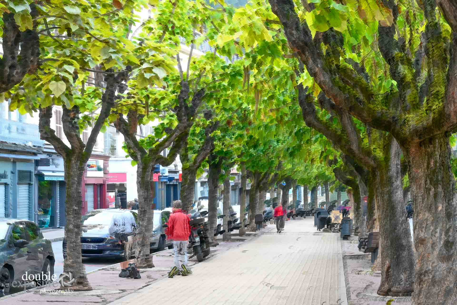 A street in Vienne, France, lined with plane trees.