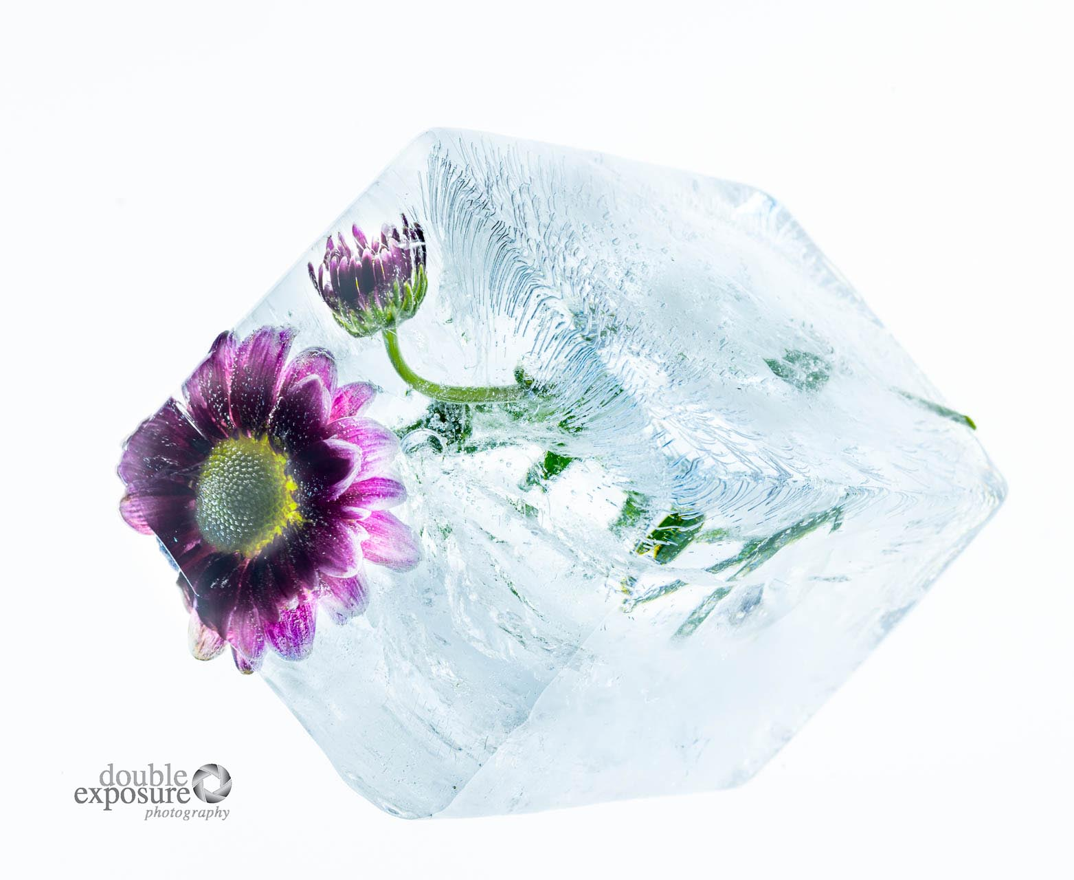 flowers frozen in a giant ice cube