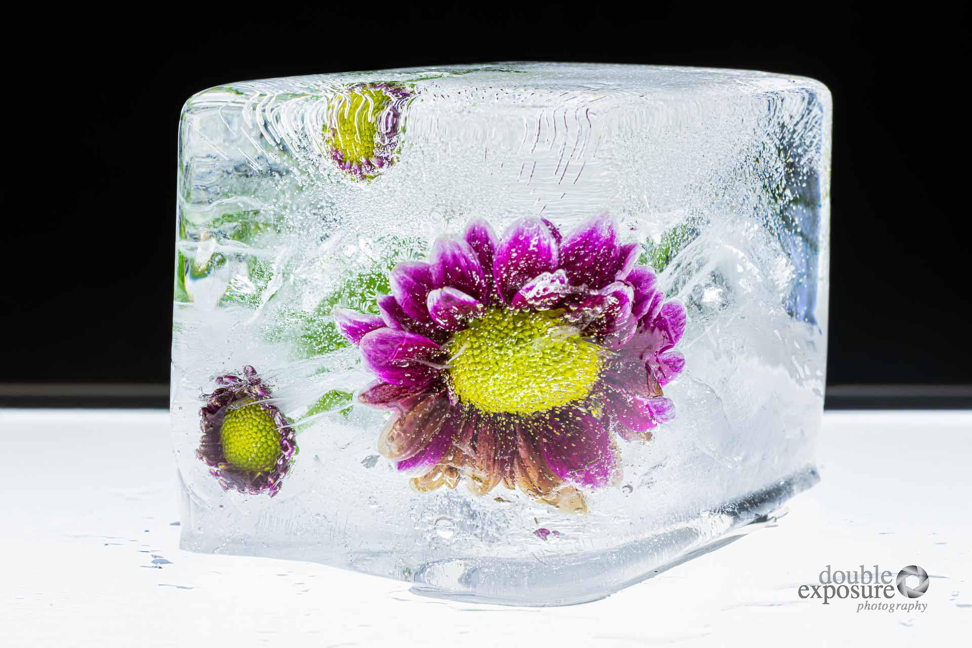 beautiful flowers photographed in ice